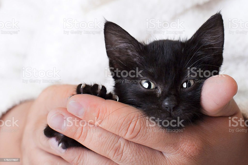 Black Kitten in my Hand stock photo