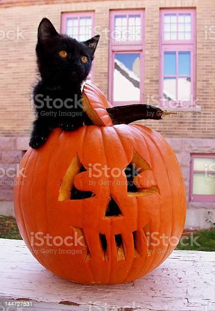 Black kitten in pumpkin picture id144727531?b=1&k=6&m=144727531&s=612x612&h=okpgk5axizrhh2j no bf4o phhkvb1feb65x7snzak=