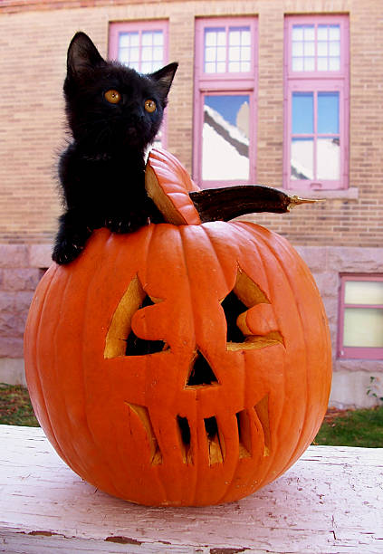 Black kitten in pumpkin picture id144727531?b=1&k=6&m=144727531&s=612x612&w=0&h=k1swramohicr7g2dmidky jy axm6zwsmgrwrz7pwxw=
