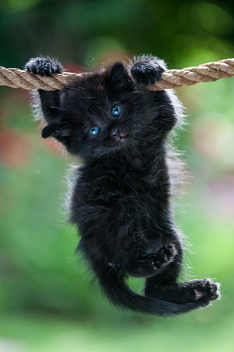 Black kitten is hanging on the rope