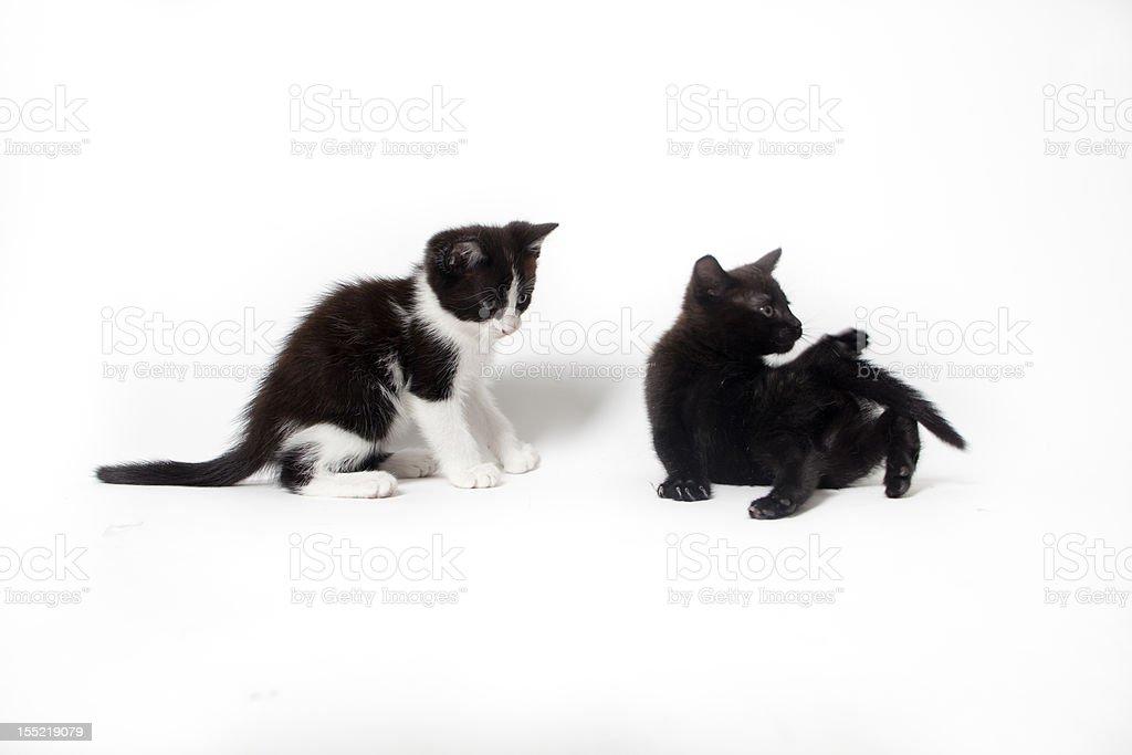 black kitten isolated on white background royalty-free stock photo