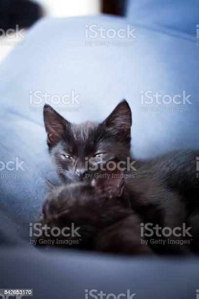 Black kitten keeping watch picture id842653170?b=1&k=6&m=842653170&s=612x612&h=49izbh69k cn2 viri v7humfy3rlj0aavgkoejmy s=