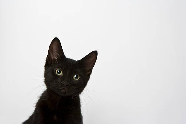 Schwarze Katze Blick in die Kamera im Studio – Foto