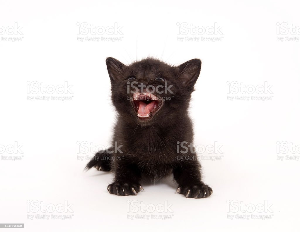 Black kitten looking up and crying royalty-free stock photo