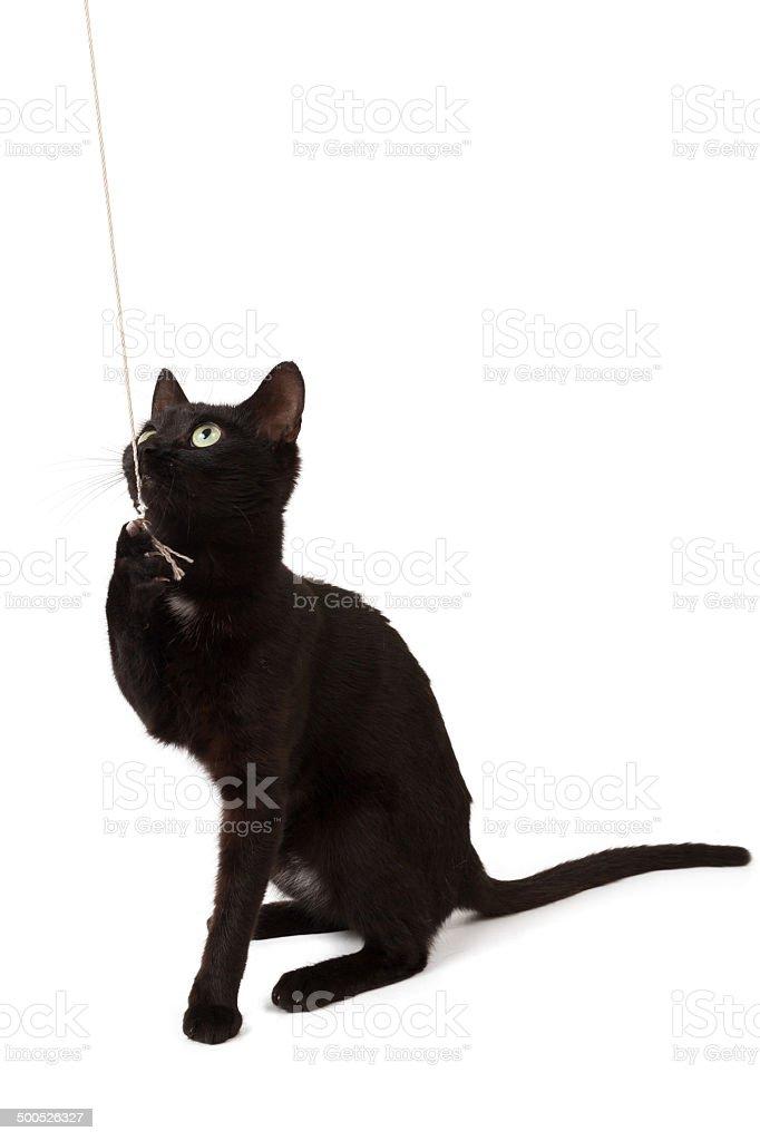 Black kitten looks. stock photo