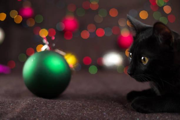 Black kitten near christmas decorations and luminous garlands picture id1186565594?b=1&k=6&m=1186565594&s=612x612&w=0&h=sgb31cidjr6qv8ecbbx5pg4q8kjislbwkujl5jcrlxs=