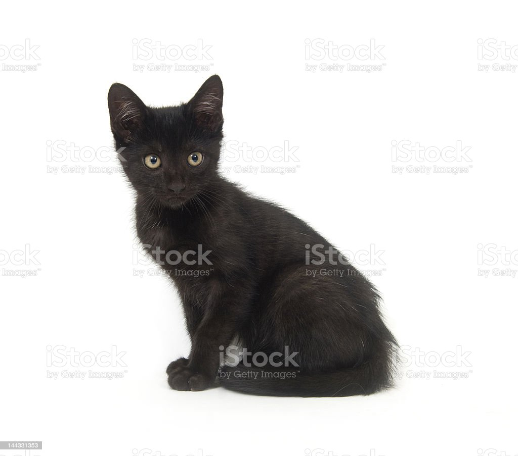 Black kitten on white background royalty-free stock photo