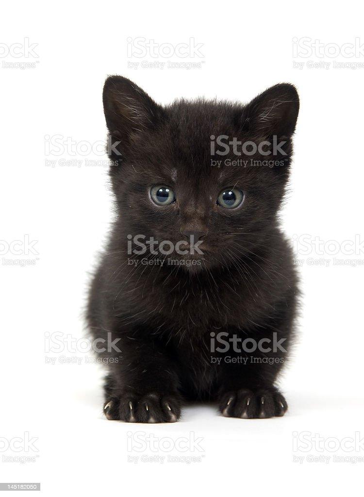 Black kitten on white background stock photo
