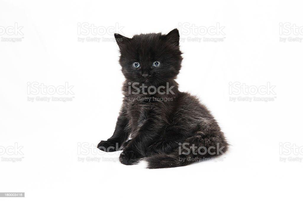 검은 고양이 새끼 흰색 배경의 royalty-free 스톡 사진