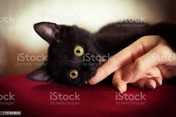 Black kitten picture id1137949823?b=1&k=6&m=1137949823&s=612x612&h=b3msc8 p vl0mcbh2v90swtcv89t8qj2a5asfp7huam=