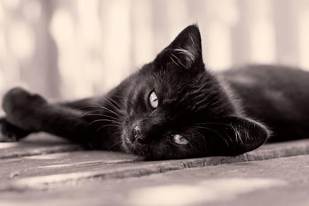 Black kitten picture id184614028?b=1&k=6&m=184614028&s=612x612&w=0&h=6p6b3xerzyv6q0bgcfw52sd zfbote 12qmg2lq asg=