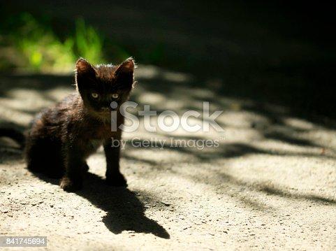 black kitten sitting on ground