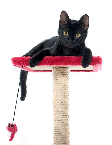 Black kitten playing picture id507844488?b=1&k=6&m=507844488&s=612x612&w=0&h=mcnndemwo8es g9gn5vd3z3yfu8ibv4vexanbsqstb4=