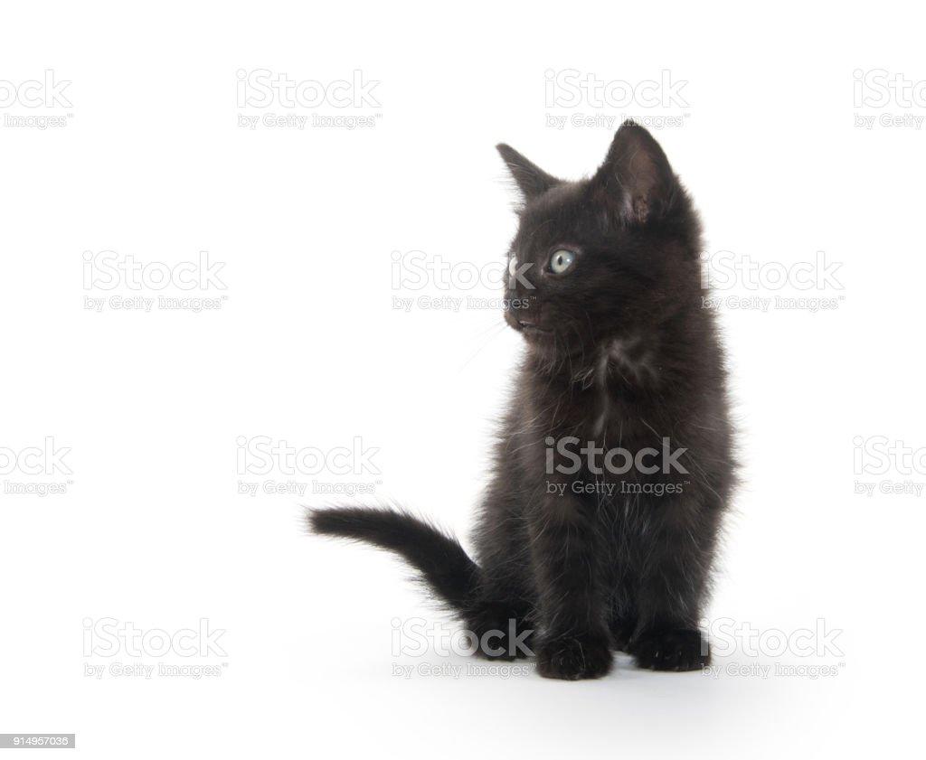 Black kitten playing stock photo