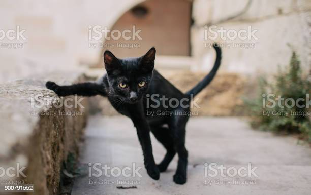Black kitten running on the street picture id900791552?b=1&k=6&m=900791552&s=612x612&h=yfo iqumjtzalo93irnvi86htfxryzrf4sxhmx46hhw=