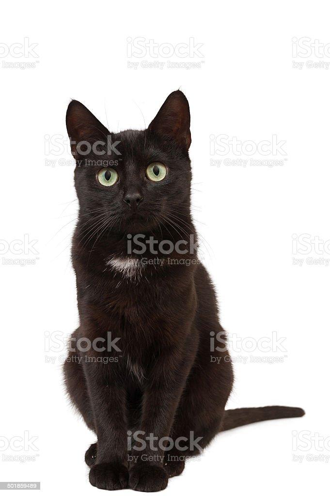 Black kitten sits. stock photo