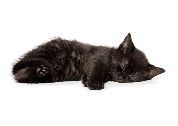 Black kitten sleeping picture id480136043?b=1&k=6&m=480136043&s=612x612&w=0&h=dujdaklmbwdamavbg75deqsefzynt6g2ep 0onr22oe=