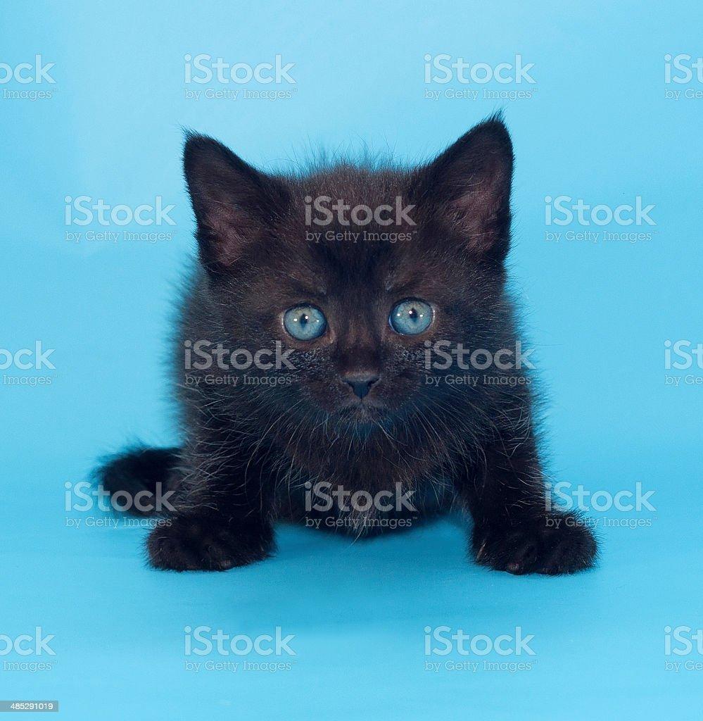 Schwarze Katze Mit Blauen Augen Stockfoto Und Mehr Bilder