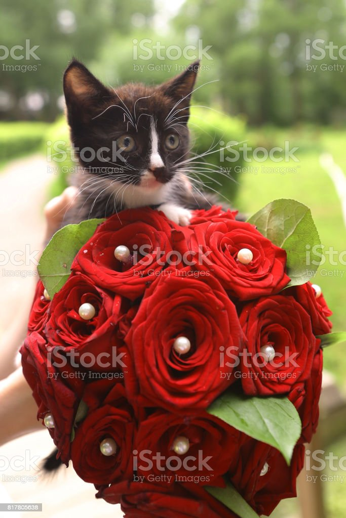 Black Kitten With Bridal Red Rose Bouquet Stock Photo & More ...