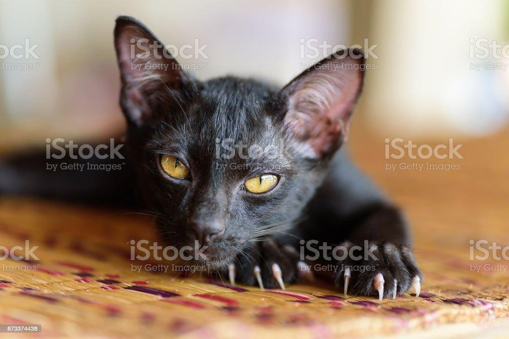 Schwarzes Kätzchen mit Klaue und Kratzer auf der Matte – Foto