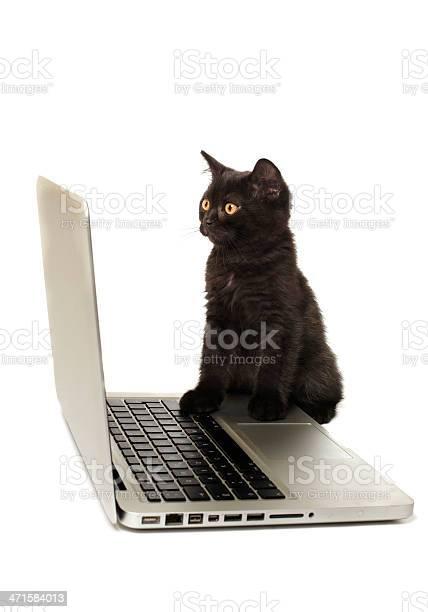Black kitten with laptop picture id471584013?b=1&k=6&m=471584013&s=612x612&h=32rtjzbteigih7faqrlaugjvns3vyvacc1 3yya6xu0=