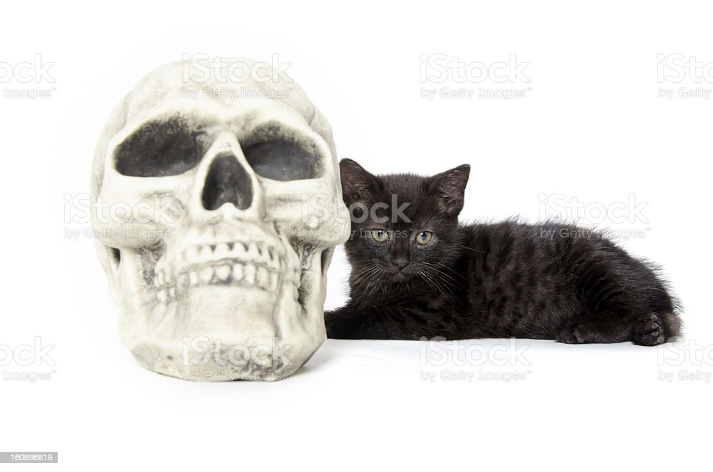 Black kitten with skull stock photo