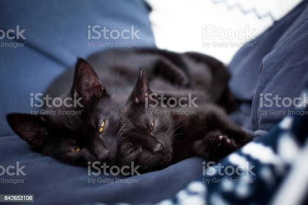 Black kittens sleeping on a blue bed picture id842653106?b=1&k=6&m=842653106&s=612x612&h=q dgbiab3awitd7kjxzx9tfwex10yi ud8uwx2mdbvk=