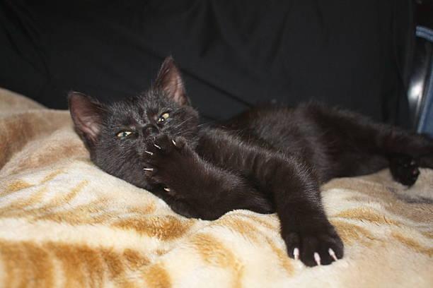 Schwarze kitty – Foto