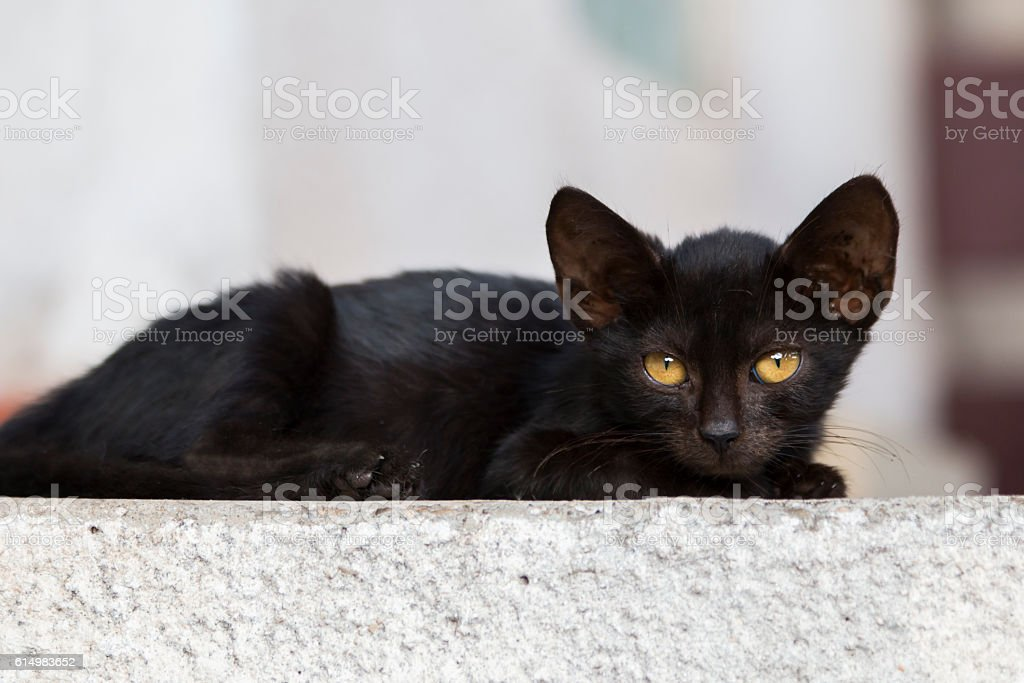 Black kitty with green eyes stock photo