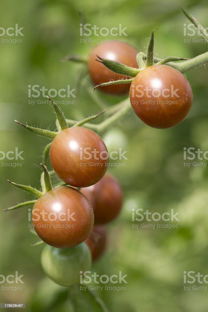 Black Krim Tomatoe stock photo