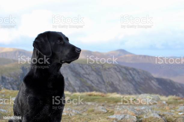 Black labrador in the lake district picture id1052452764?b=1&k=6&m=1052452764&s=612x612&h=1vkb 70679wetzvxalxx8weepfqad92yswg44idkoxc=