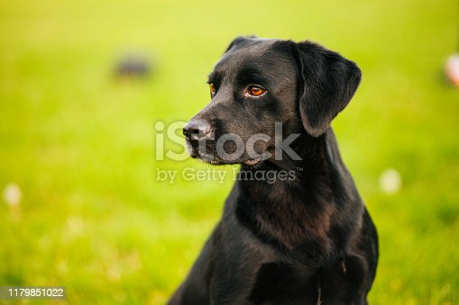 Agricultural Field, Agriculture, Animal, Animal Body Part