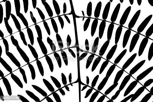 637513166istockphoto black leaf pattern on white background 909572780