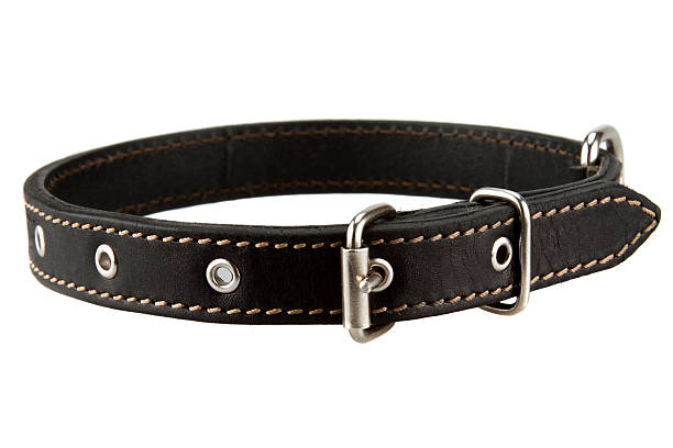 hundehalsband aus schwarzem leder - halsband stock-fotos und bilder
