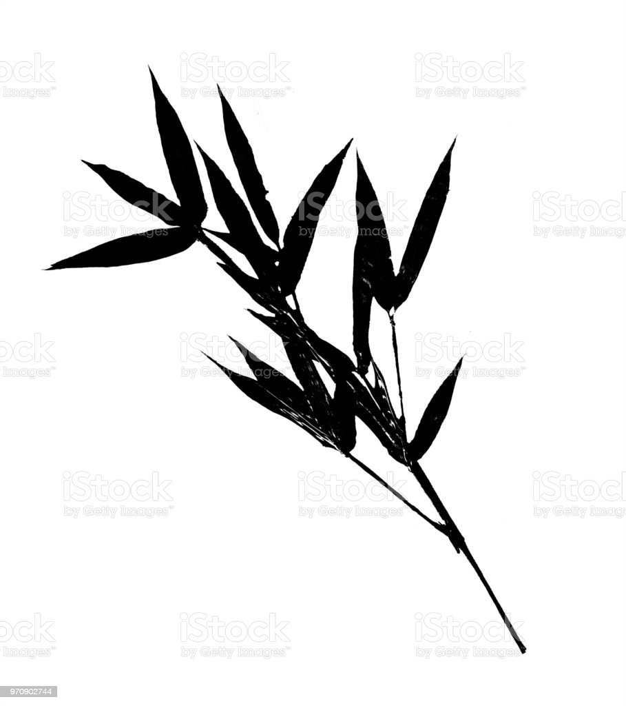 Black leaves on bamboo branch silhouette isolated on white background. stock photo