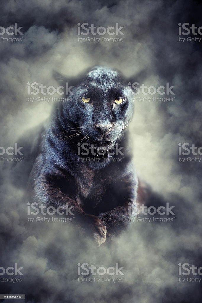 Black leopard in smoke圖像檔