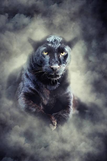 black leopard in smoke - svart leopard bildbanksfoton och bilder