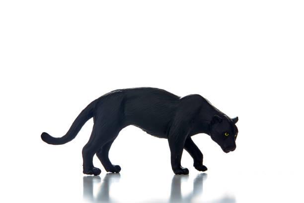 leopard noir d'un fond blanc - panthere noir photos et images de collection