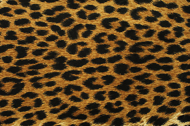 black leopard spots - animal markings stock photos and pictures