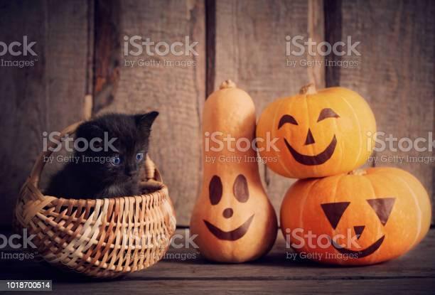 Black little cat with halloween pumpkins picture id1018700514?b=1&k=6&m=1018700514&s=612x612&h=bgf6y9cw8u3tskaowttctgy4 he4sf  dj3 ffhgpke=