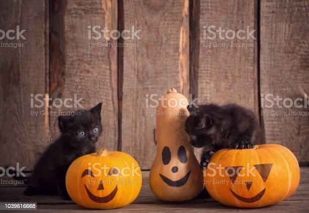 Black little cat with halloween pumpkins picture id1039616668?b=1&k=6&m=1039616668&s=612x612&h=nwbhs34v3uxo1krwd owriujpmovsj7gmmj549sdynu=