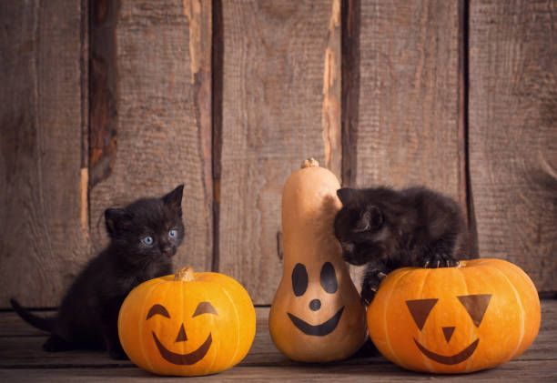 Black little cat with halloween pumpkins picture id1039616668?b=1&k=6&m=1039616668&s=612x612&w=0&h=8hbhok2pamkijkittk6aox jhvk mefffvsje23tvmi=
