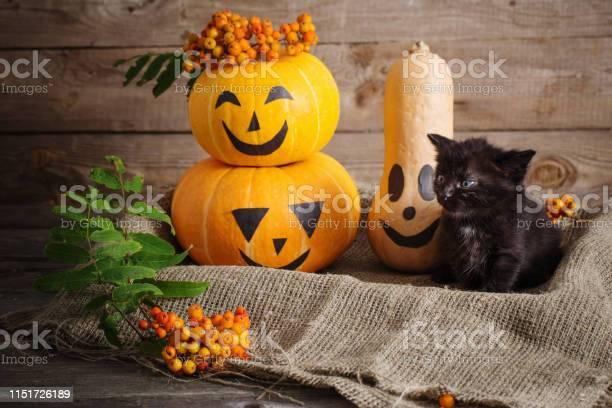 Black little cat with halloween pumpkins picture id1151726189?b=1&k=6&m=1151726189&s=612x612&h=1kbtljxszy8kczcwbfuevj1tghbcsn3eoilep0akzwy=