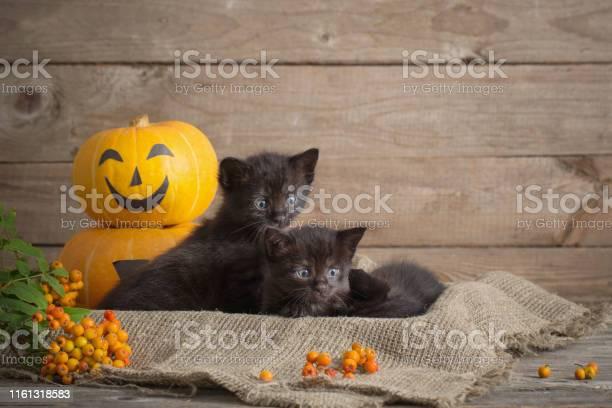 Black little cat with halloween pumpkins picture id1161318583?b=1&k=6&m=1161318583&s=612x612&h=a5lejaspkrtzgcy1ruupl1hqgzjoorqpkah9 vbazla=