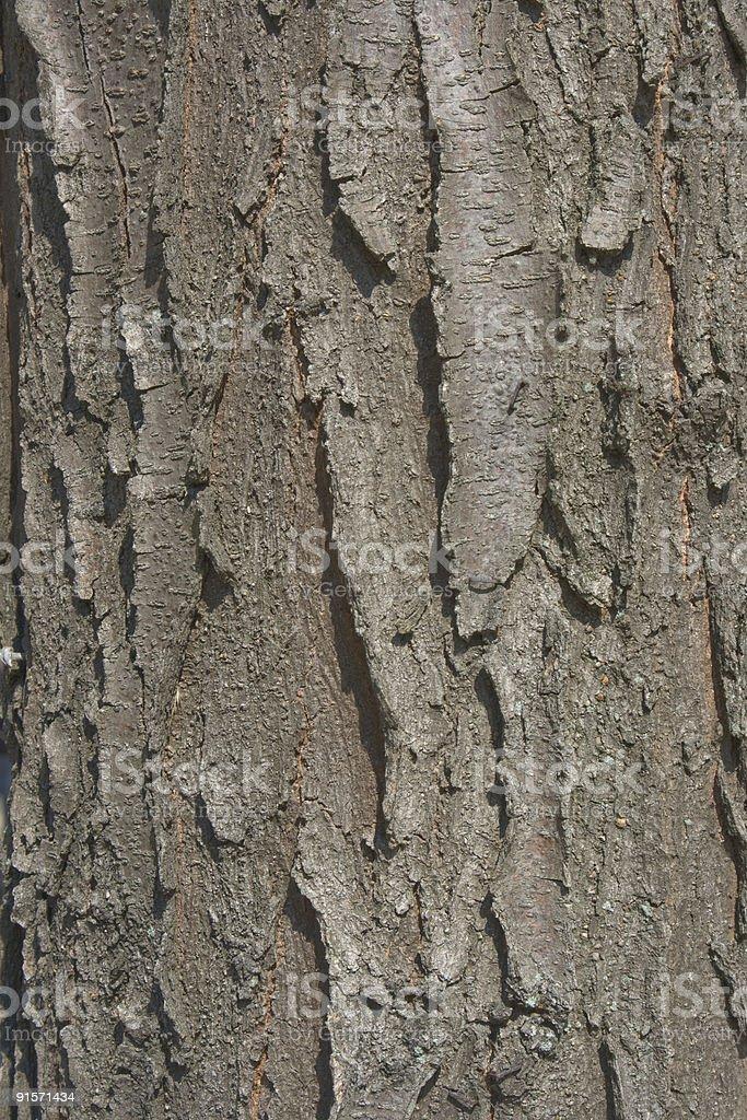 Black Locust Bark Background stock photo