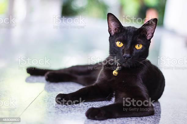 Black male cat show interest at photo camera picture id483068802?b=1&k=6&m=483068802&s=612x612&h=cqbmmbrsgpkqgsqwszuf2fr mctbyc0iyzp4flho6xi=
