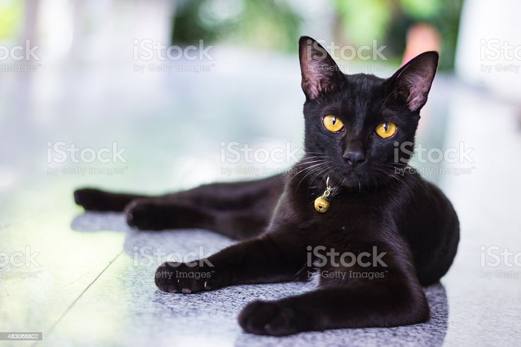 Black male cat show interest at photo camera stock photo