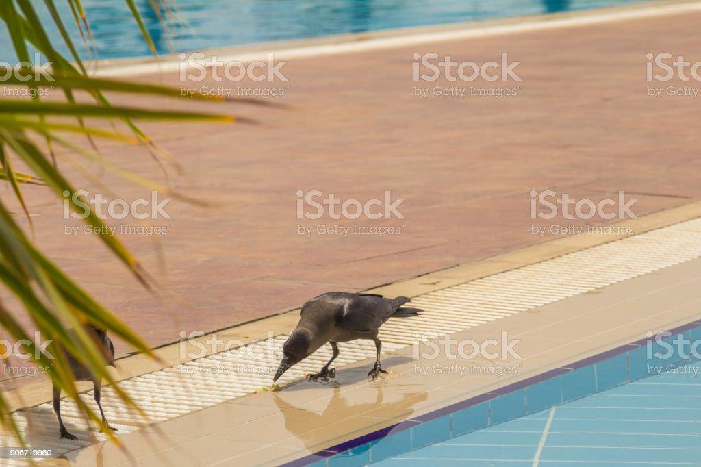 Black Maria stock photo
