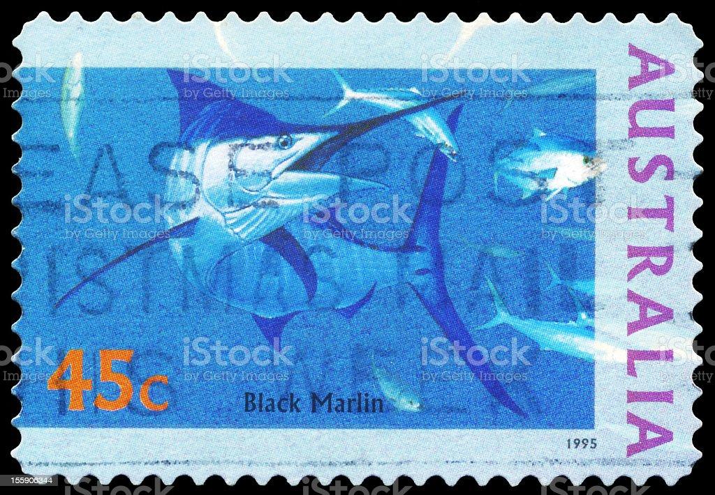 Black Marlin stock photo