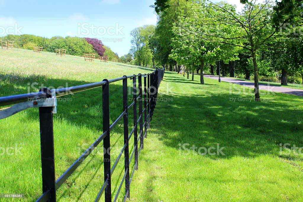 Black Metal Fence Farm Field Avenue Of Horse Chestnut